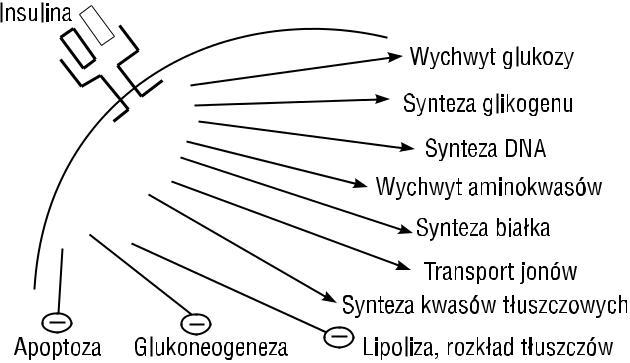 rycina5
